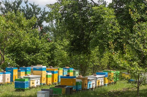 Colmeias de casco simples e multicascos em apiário. as abelhas retornam às colméias durante a colheita do mel no verão. Foto Premium