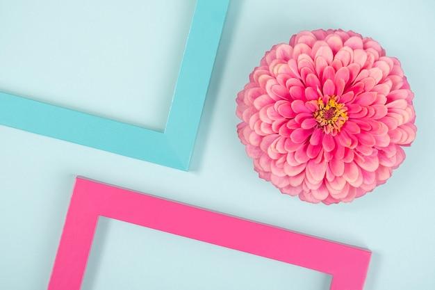 Composição criativa composta por uma flor e molduras coloridas brilhantes. vista superior plana. Foto Premium