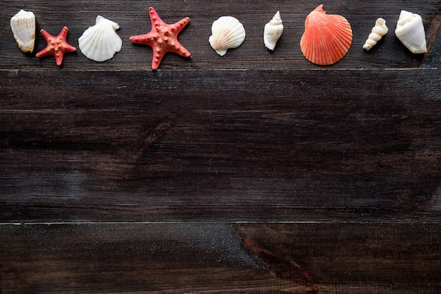 Composição de conchas do mar em fundo de madeira com espaço de cópia Foto Premium