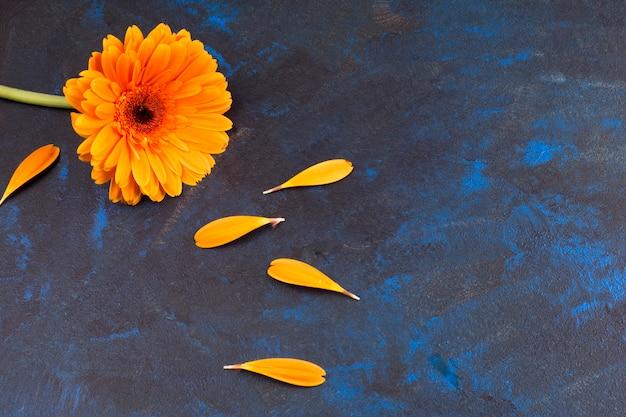 Composição, de, flor amarela, um, pétalas Foto gratuita