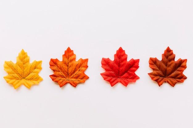 Composição de folhas de cor de outono Foto gratuita