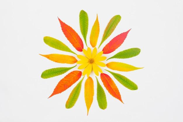 Composição de outono, padrão de folhas de outono coloridas e amarelo em um fundo branco, vista superior da camada plana Foto Premium