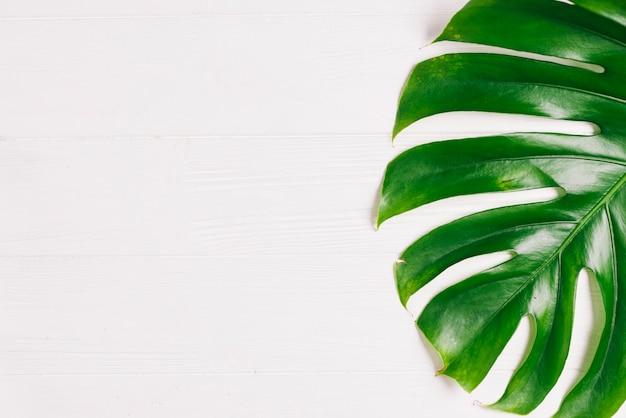 Composição de verão com folha de palmeira Foto gratuita