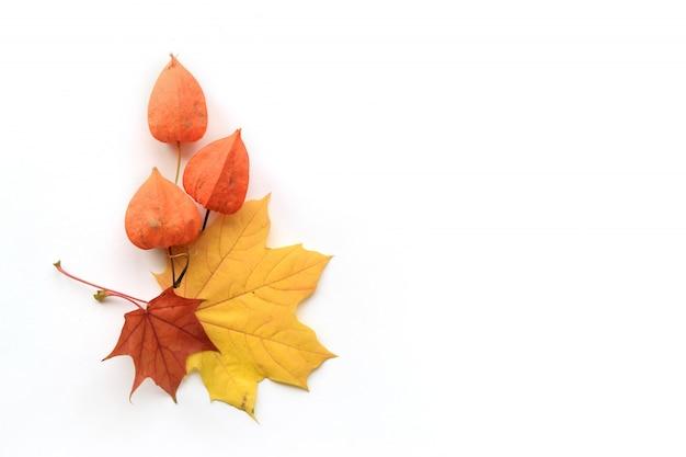 Composição do outono do quadro das folhas de bordo e do physalis no fundo branco. vista plana, vista superior Foto Premium
