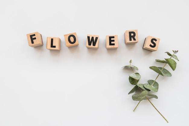 Composição mínima com letras e ramos verdes Foto gratuita