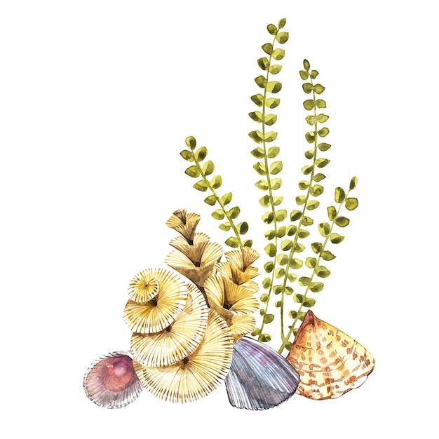 Composições a alga marinha e os corais objetam isolado no fundo branco. aquarela mão desenhada ilustração pintada. Foto Premium