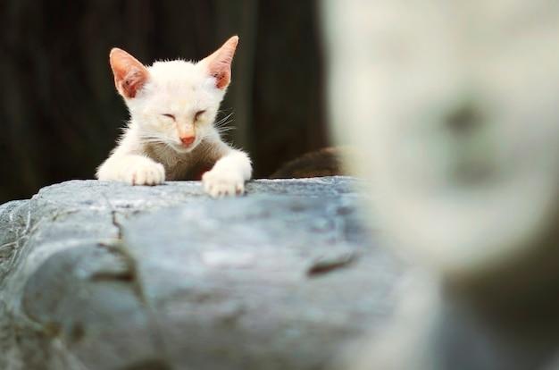 Conceito animal adorável da vaquinha do gato Foto gratuita