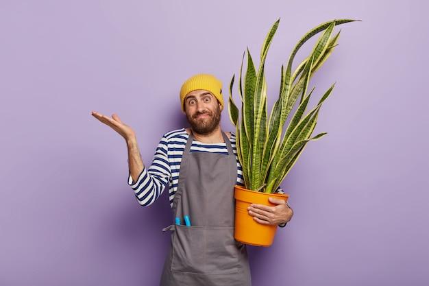 Conceito de botânica e jardinagem. cultivador de flores duvidoso segurando uma planta cobra suculenta em um vaso Foto gratuita