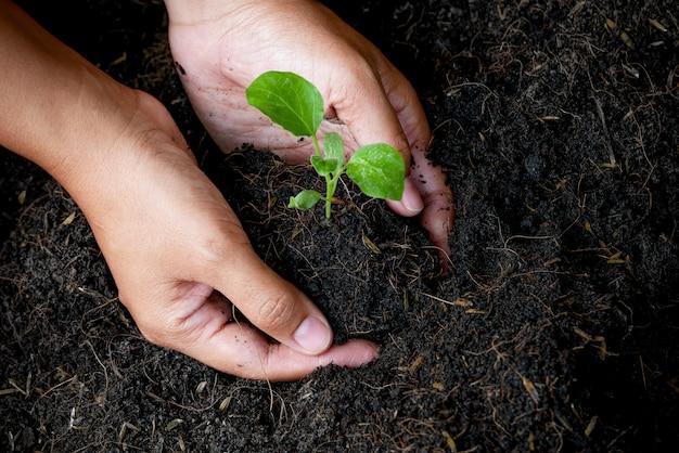 Conceito de crescimento, as mãos estão plantando as mudas no solo Foto Premium