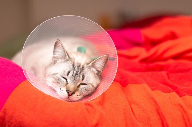 Conceito de cuidados de animais de estimação gato sonolento usando colar elizabetano, colarinho e-colar ou colar buster com espaço de cópia Foto Premium