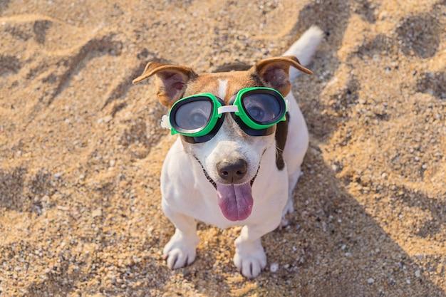 Conceito de diversão passatempo com cachorro no verão Foto Premium
