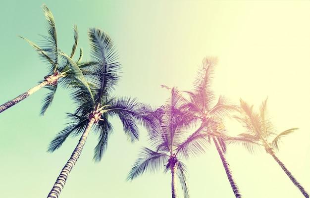 Conceito de férias de viagem de verão. palmeiras bonitas no fundo do céu azul. toning. Foto gratuita