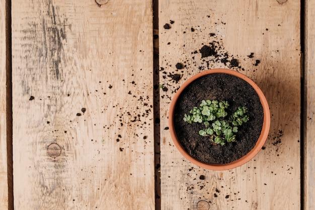Conceito de jardinagem plana leigo com copyspace Foto gratuita