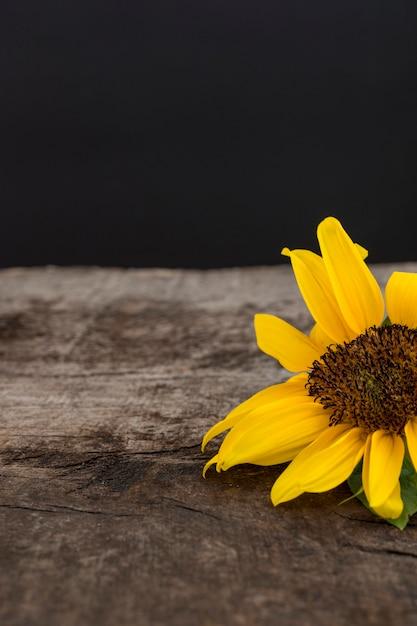 Conceito de outono com girassol Foto gratuita