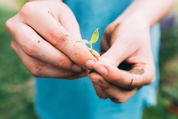 Conceito de pomar com as mãos Foto gratuita