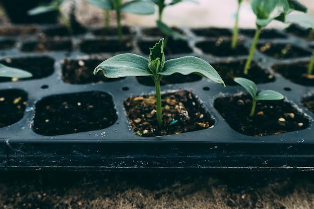 Conceito de pomar com pequenas plantas Foto gratuita