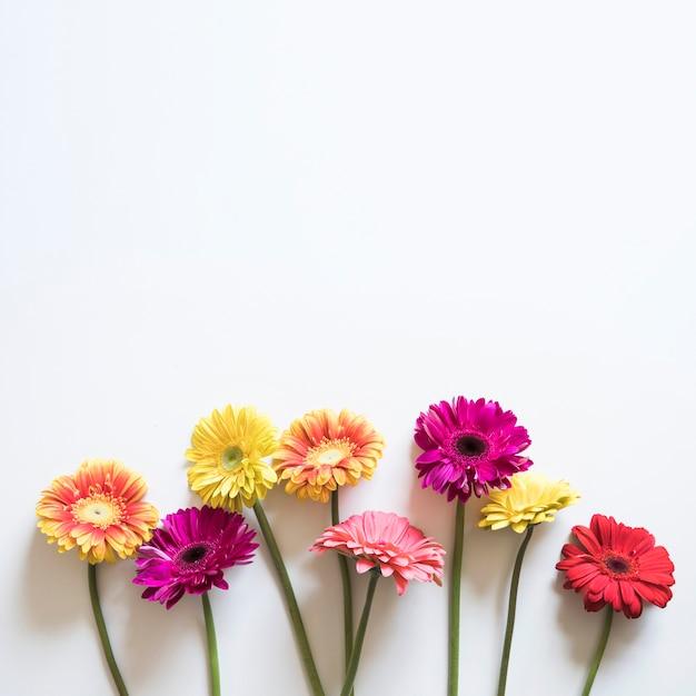 Conceito de primavera com flores coloridas Foto Premium