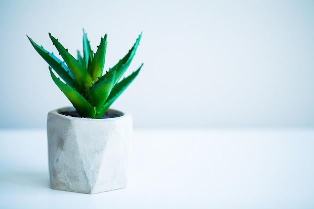 Conceito de spa, planta aloe vera na mesa no banheiro Foto Premium