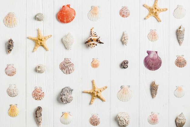 Conceito de verão com conchas Foto gratuita