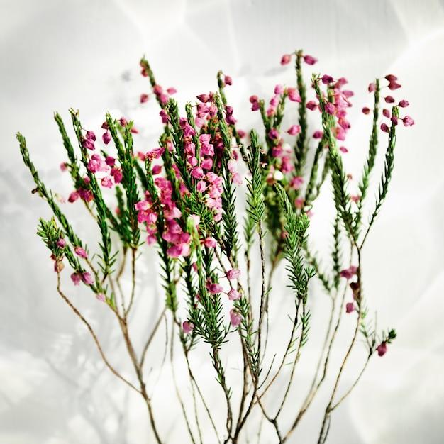 Conceito fresco bonito da flor da haste Foto gratuita
