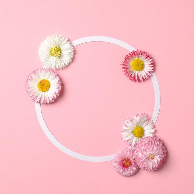 Conceito mínimo de natureza primavera. margarida flores e cartão de papel em forma de círculo branco sobre fundo rosa pastel. Foto Premium