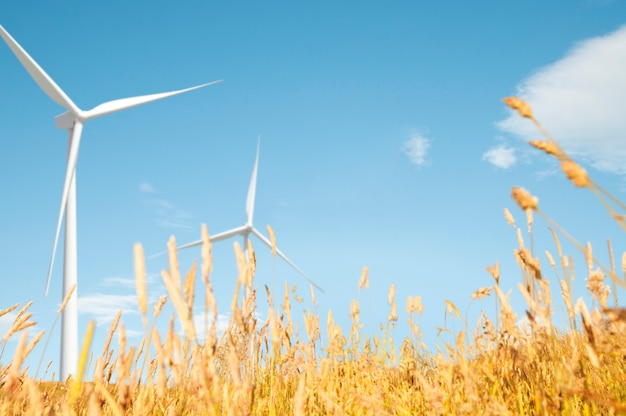 Conceito natural do cenário do monte do campo da pastagem do moinho de vento Foto gratuita
