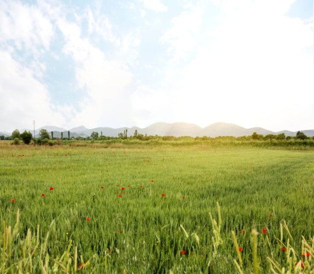 Conceito rural com campo de flores Foto Premium