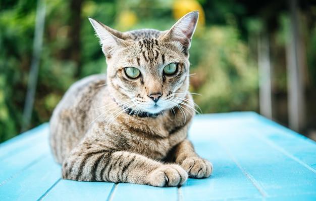 Concentre-se nos olhos do gato malhado no chão de cimento azul Foto gratuita