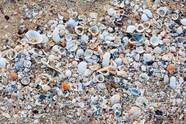 Conchas do mar com o fundo. Foto Premium