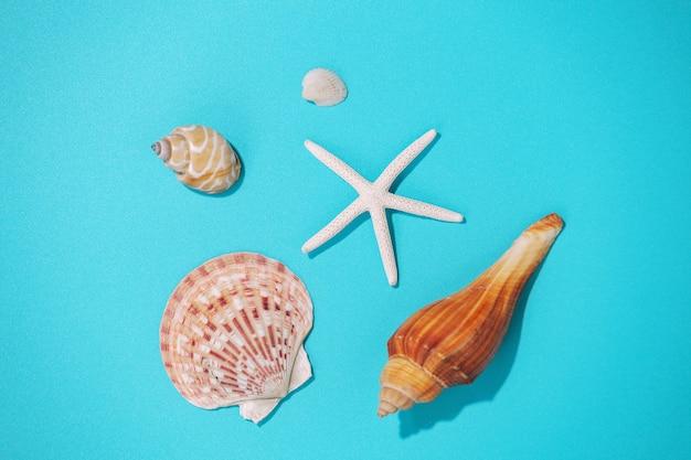 Conchas do mar em fundo azul, vista superior Foto Premium