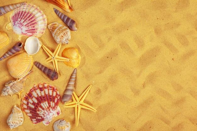 Conchas do mar na areia. fundo de férias de verão do mar Foto Premium
