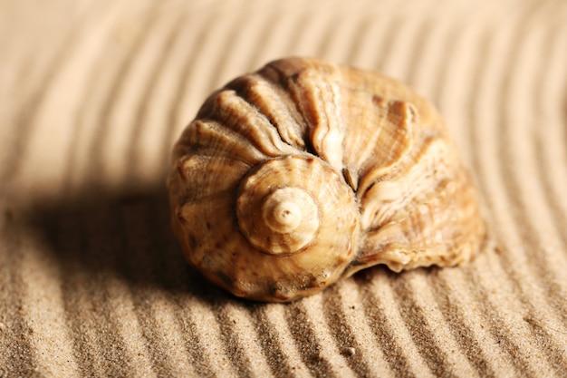 Conchas do mar na areia Foto gratuita