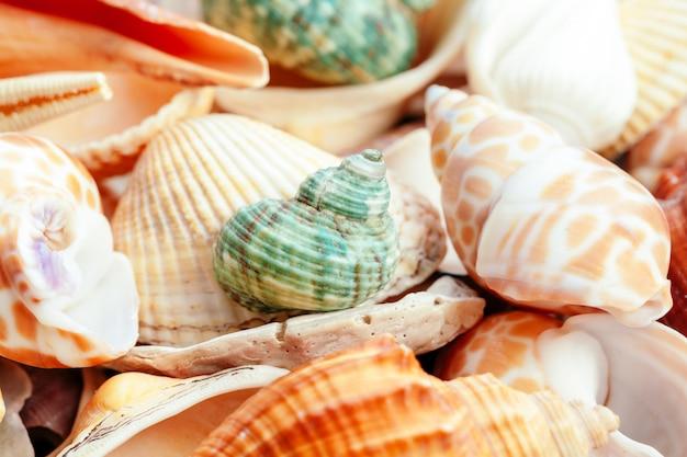 Conchas do mar. natureza. Foto Premium