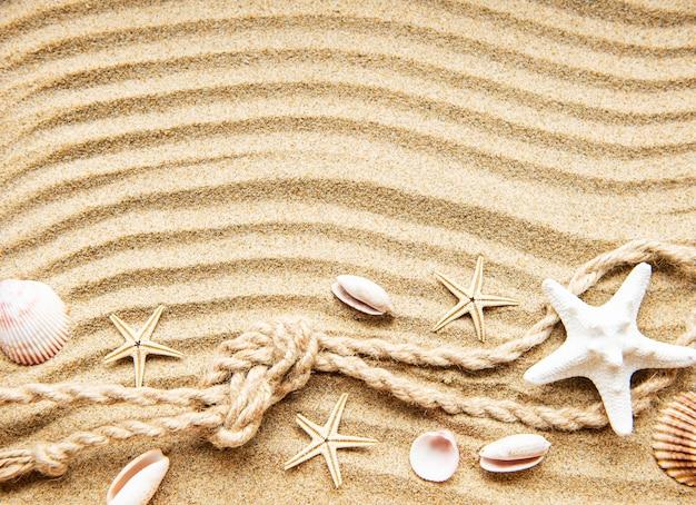 Conchas, estrelas do mar e corda na areia Foto Premium