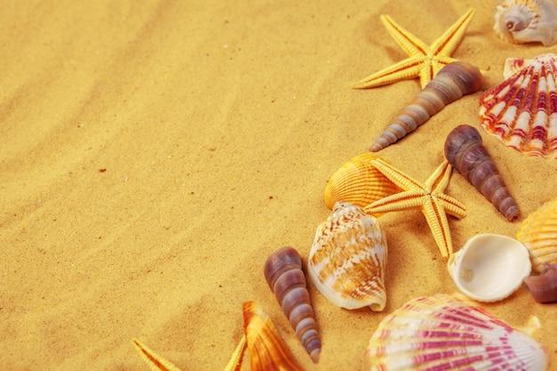Conchas na areia. fundo de férias de verão do mar Foto Premium
