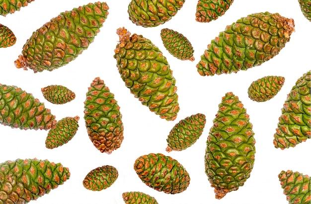 Cones verdes de pinho selvagem em branco Foto Premium