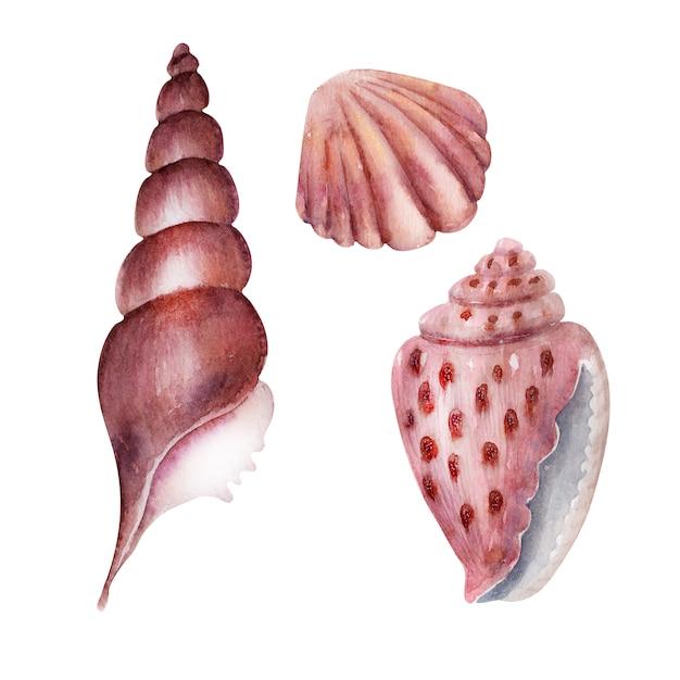 Conjunto de aquarela conchas do mar rosa delicado Foto Premium