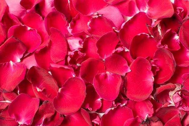 Conjunto de close-up de pétalas de rosa vermelhas Foto gratuita