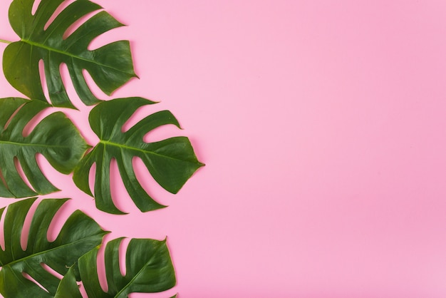 Conjunto de folhas verdes de monstera Foto gratuita