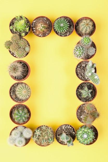 Conjunto de pequenos cactos em um fundo amarelo. vista do topo. Foto Premium