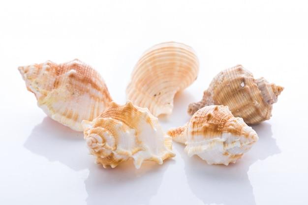 Conjunto de várias conchas de moluscos isolado no fundo branco Foto Premium