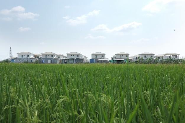Conjunto habitacional com campo de arroz Foto Premium