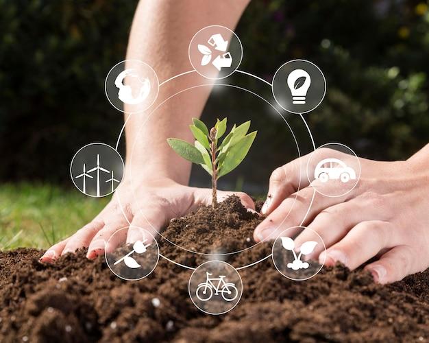 Conservação de plantas naturais Foto gratuita