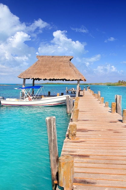 Contoy, ilha, méxico, madeira, cais, reserva natureza Foto Premium