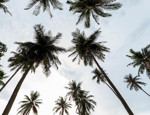 Coqueiros no fundo do céu Foto Premium