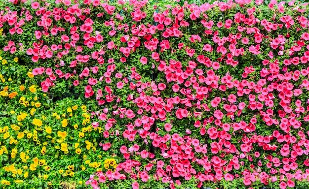 Cor cidade gramado verão trajeto folha Foto gratuita