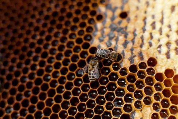 Cor natural fechar favo de mel na colméia de madeira com abelhas nele Foto Premium