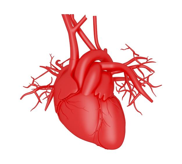 Coração humano 3d Foto Premium