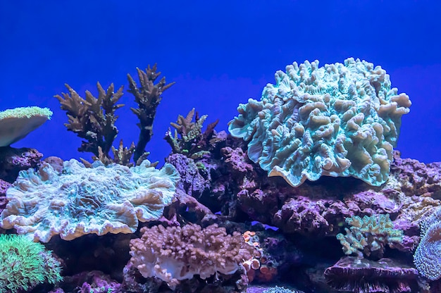 Corais coloridos sob o mar em tailândia. Foto Premium