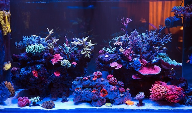 Corais em um aquário marinho. Foto Premium